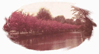 Canal with Crabapple Trees